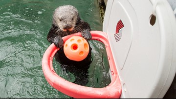 The Oregon Zoo has a new otterly unbelievable dunking prodigy