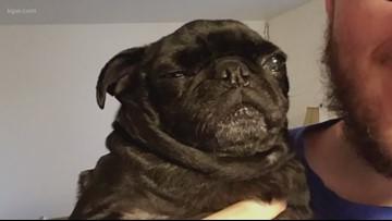 Beaverton couple asks for return of pug
