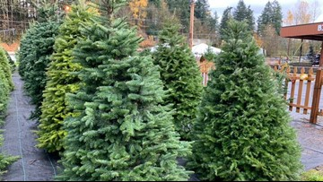 Customers to pay higher prices for limited Christmas tree supply