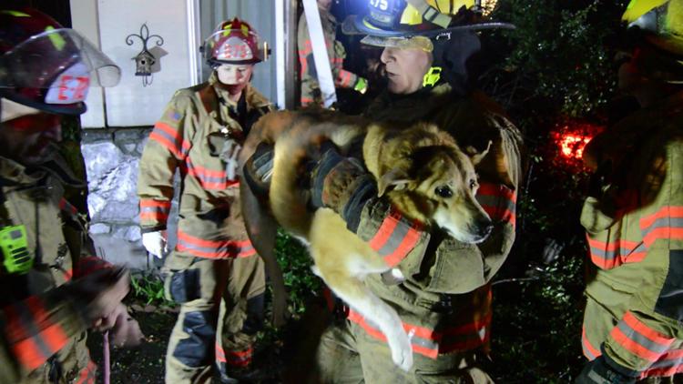 Gresham fire rescue dog