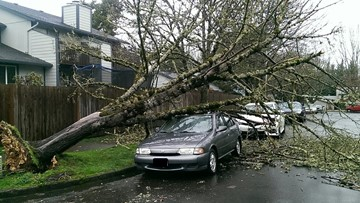 Downed trees, flooding, power outages reported across Oregon amid stormy conditions