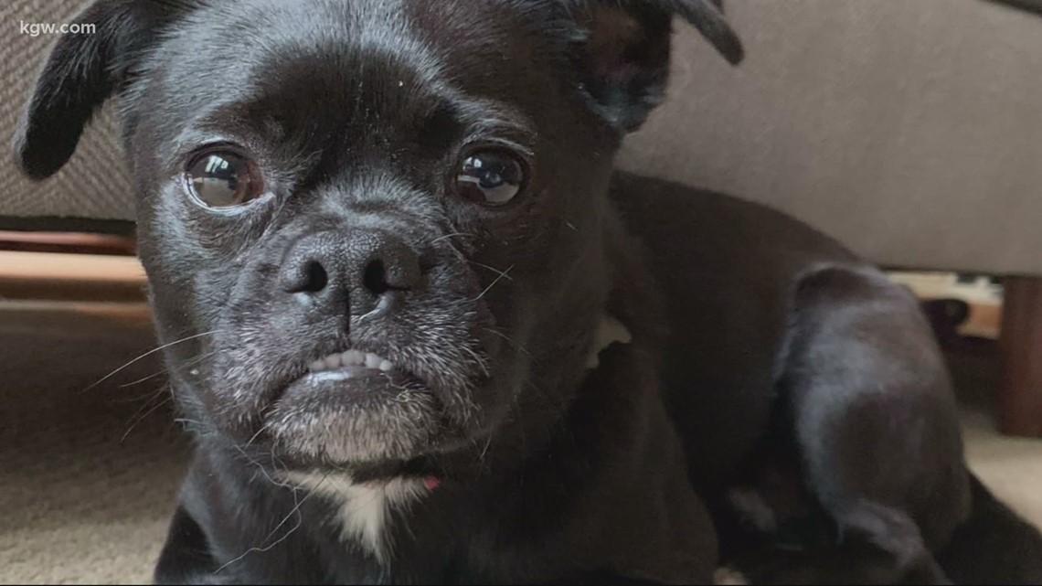 Lake Oswego woman, dog reunite after more than a year apart