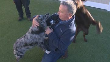 Rod on the Job: Doggy Daycare