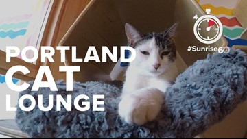 #Sunrise60: Purrington's Cat Lounge, the first cat cafe on the West Coast, reopens with new owners