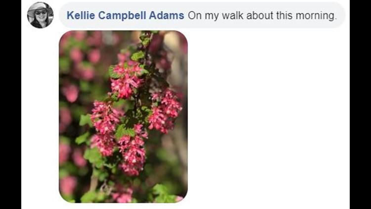 flowers on facebook