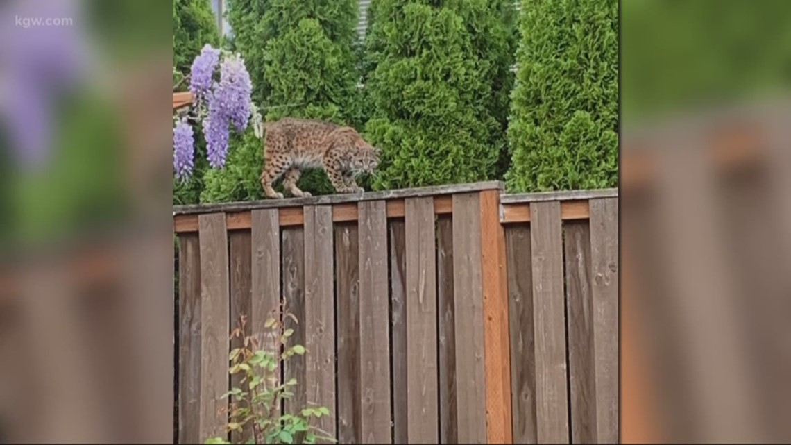 Spot wildlife? Portland Audubon wants to know