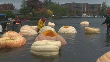 Giant Pumpkin Regatta in Tualatin