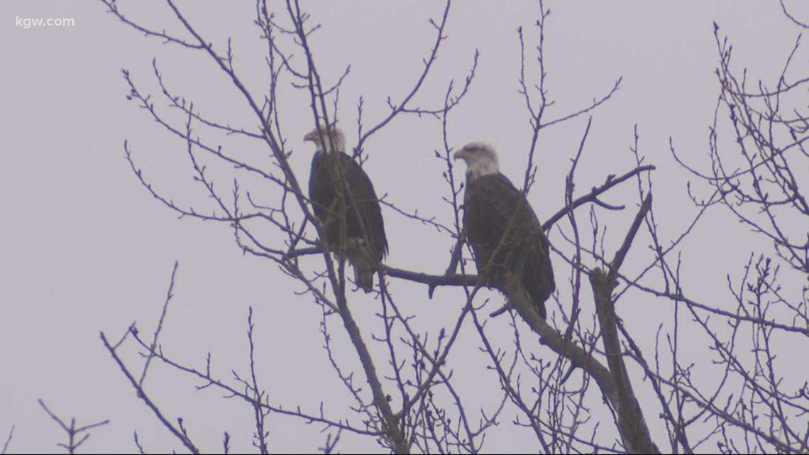 Grant's Getaways: A convocation of eagles