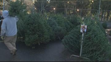 'We were short 800 trees this year': Christmas tree shortage impacting charities
