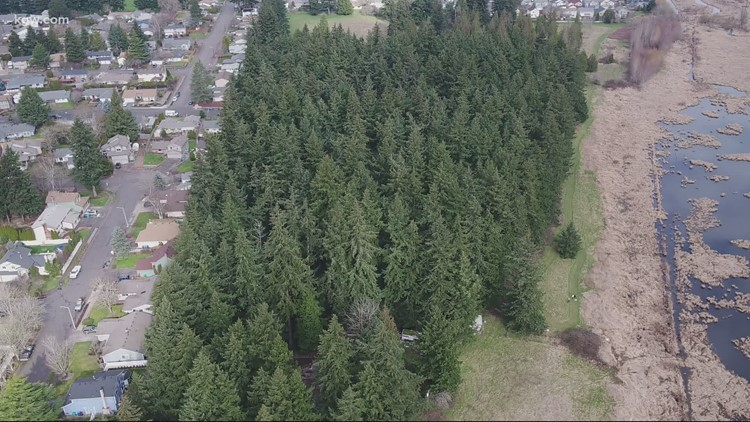 Gresham neighborhood fights to save hundreds of trees planned for removal by development