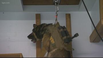Watch: K-9 'Stark' training to find bad guys hiding in attics