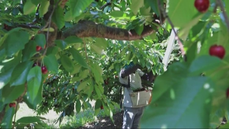 Tracking heat wave impact on Pacific Northwest crops, farm workers