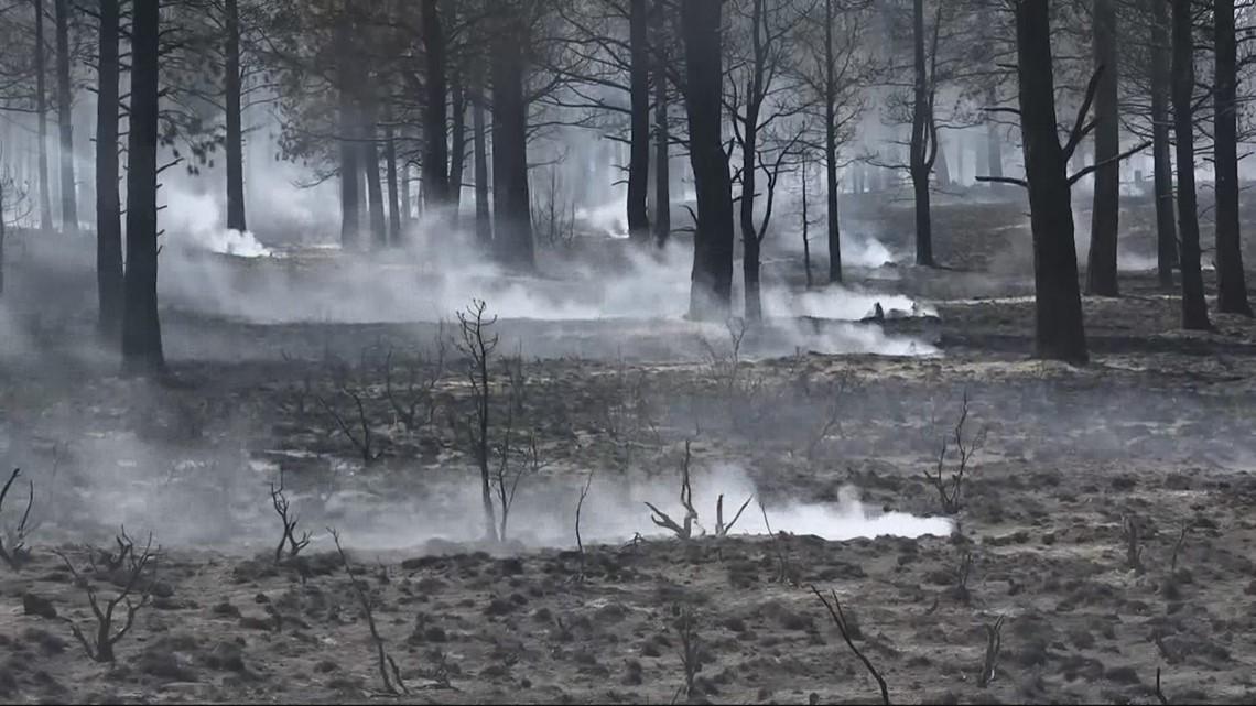 Wildfires increase beetle infestation risk