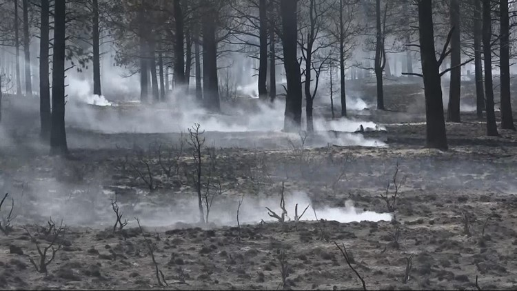 Foresters concerned of a post-wildfire beetle invasion