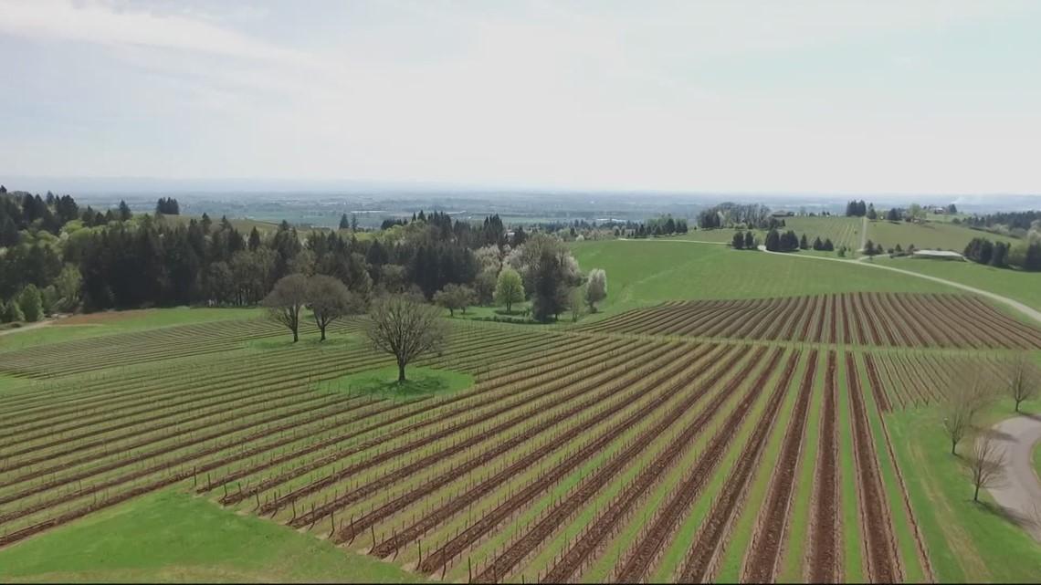 Willamette Valley wine gets international honor