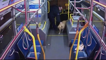 TriMet bus driver saves dog from being stolen