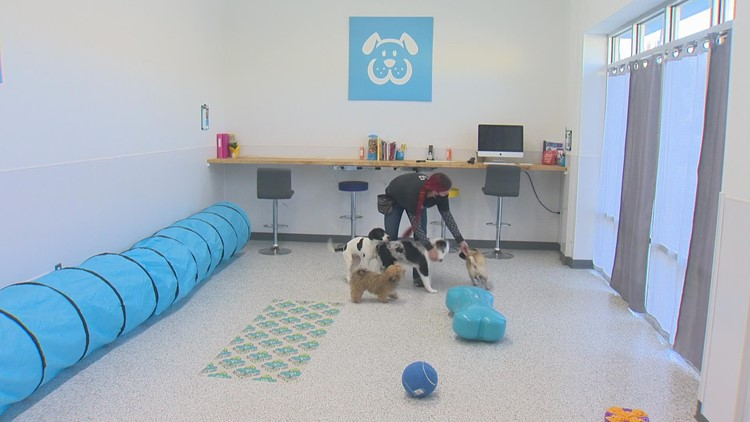 Out & About: Dog training at Wags Pet Resort