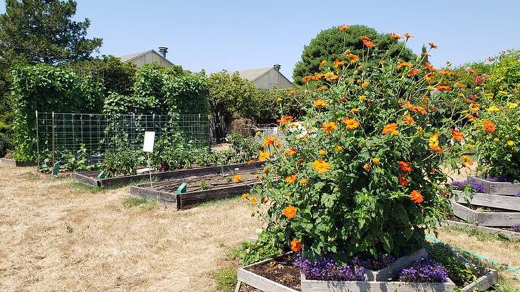Oregon's free online vegetable gardening course draws in thousands following stay-home orders