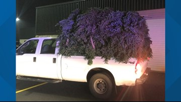 Deputies arrest two Washington County men for stealing fir boughs