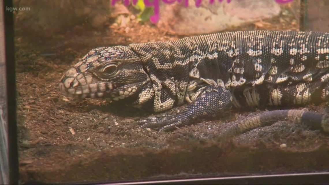 Largest reptile expo in Northwest