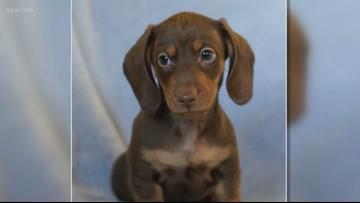 Beaverton veterinarian accused of animal abuse