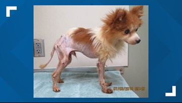 Humane Society offers $500 reward for information on abused dog