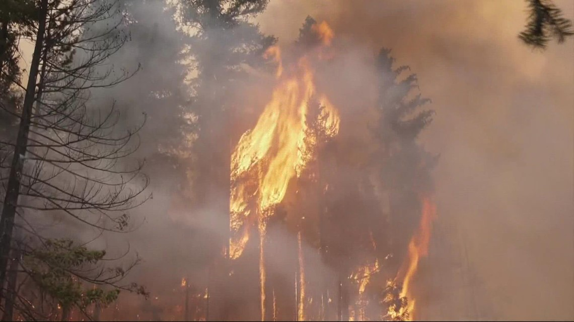 Experts say forest thinning with prescribed burns can help reduce wildfires