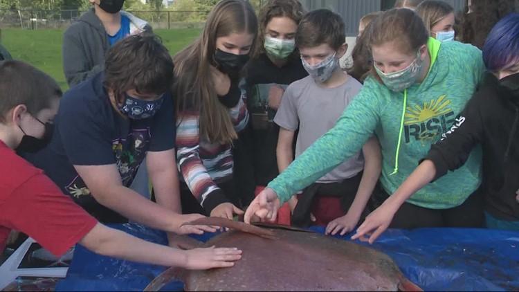 7th graders dissect rare opah fish found on Oregon Coast