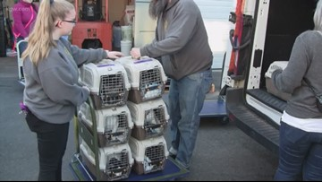 30 cats, 18 dogs orphaned in Alabama tornado arrive at Oregon Humane Society