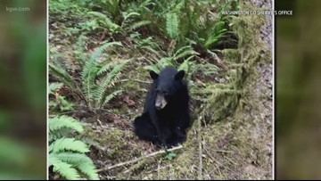 After killing of habituated bear, Oregon officials warn: Don't feed wildlife