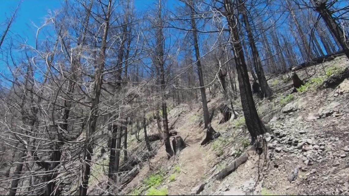 Nonprofit donates nearly $1 million to replant trees burned last year in the Beachie Creek Fire