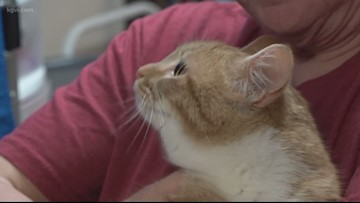 $57K grant gives cat foster program a boost