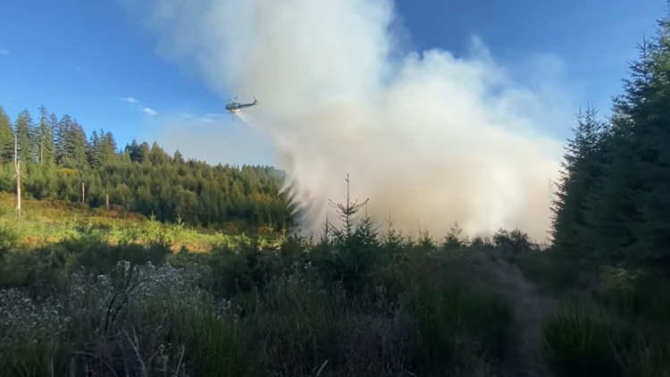 Forest fire burns more than 50 acres northwest of Scappoose