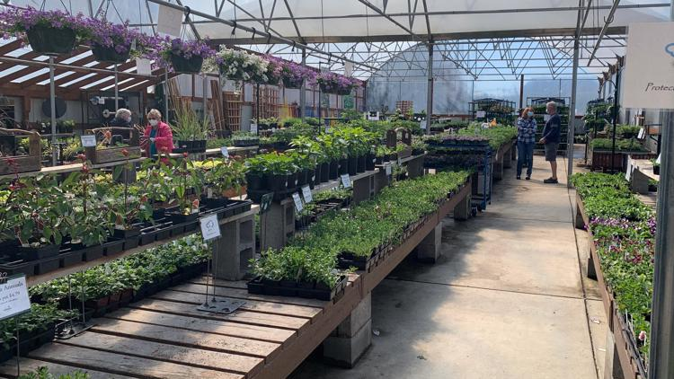 Yard and garden centers having easier time with 2nd springtime in pandemic