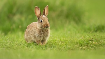 Six dead rabbits found in garbage can at Cathedral Park