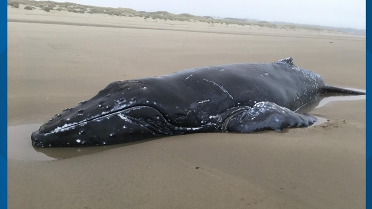 Whale stranded