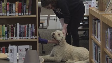 'It's comforting to know that he's there': Franklin High School therapy dog helps soothe students