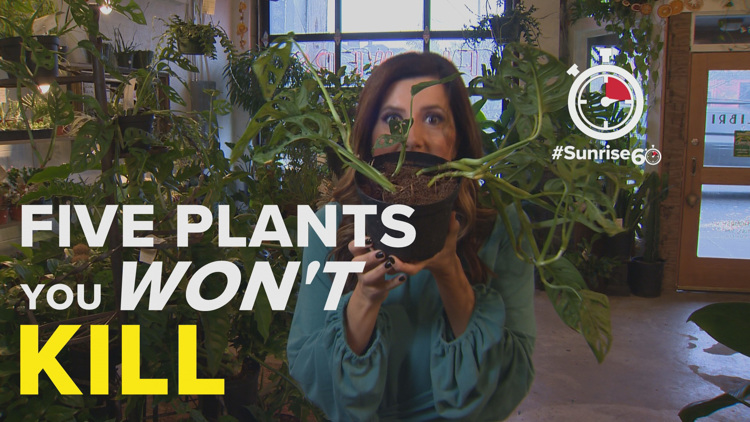 #Sunrise60: Five indoor plants that will stay alive in the Northwest