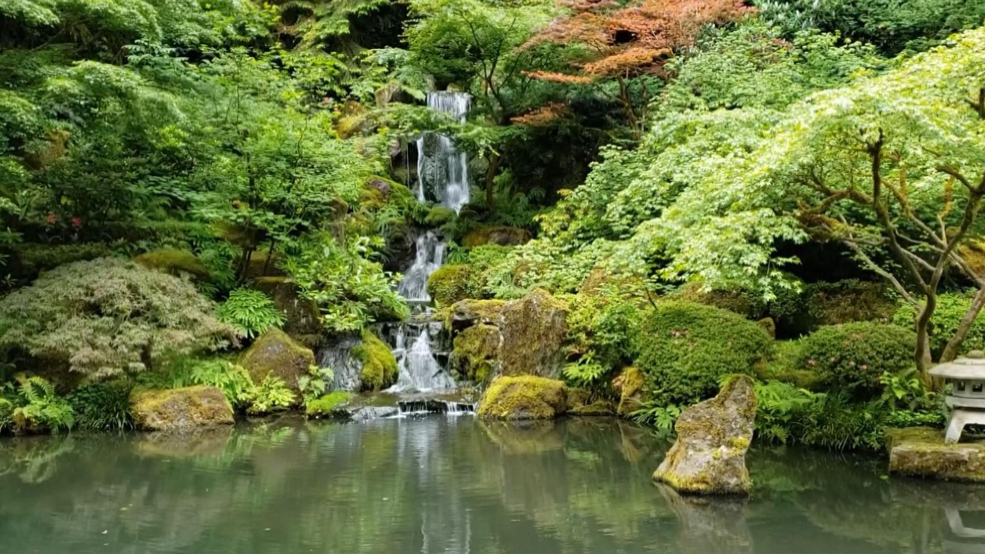 Portland Japanese Garden Closes Temporarily Due To Covid 19 Kgw Com