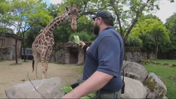 Behind the scenes at the Oregon Zoo during the coronavirus pandemic