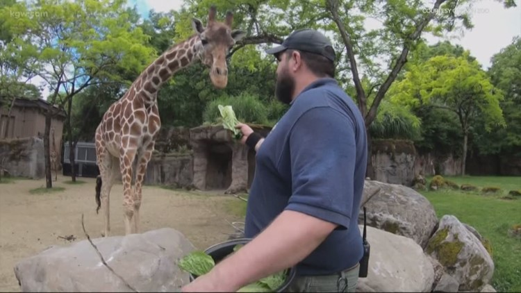 Closed to visitors, Oregon Zoo still works around the clock to care for animals