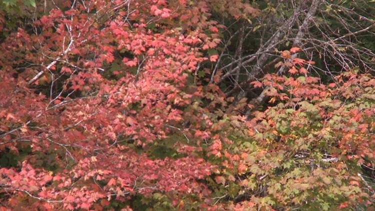Grant's Getaways: Fall for color