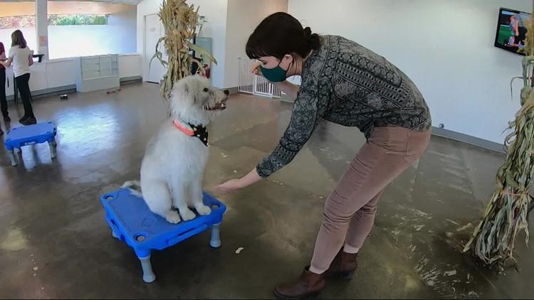 Indoor dog park opens in Southwest Portland