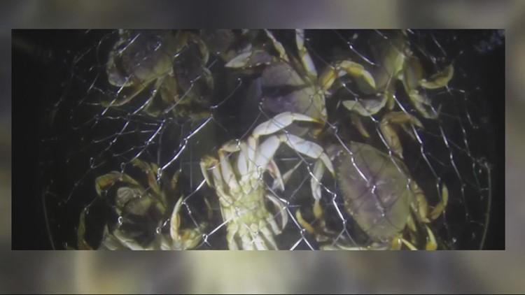 """Scientists predict """"dead zone"""" off the coast of Oregon, Washington"""