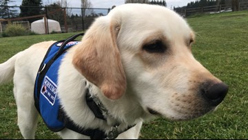 Wash. boy will grow up with diabetic alert dog thanks to donations
