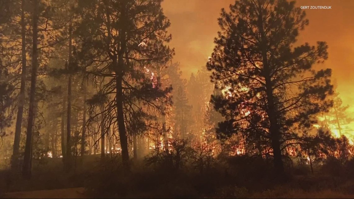 Trees killed by bark beetles helping fuel wildfires