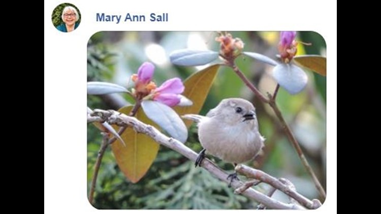 bird on facebook