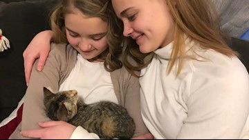 'It's been a huge blessing:' Blind abandoned kitten adopted by family of adopted children