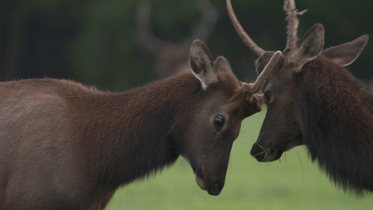 Grant's Getaways: Oregon Elk Watch