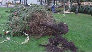 Winds topple Lincoln City Christmas tree. Again